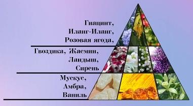 Настоящая персидская сирень пирамида