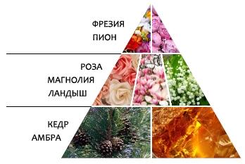 "Парфюмерная вода ""Сердце Pink"" пирамида ароматов"