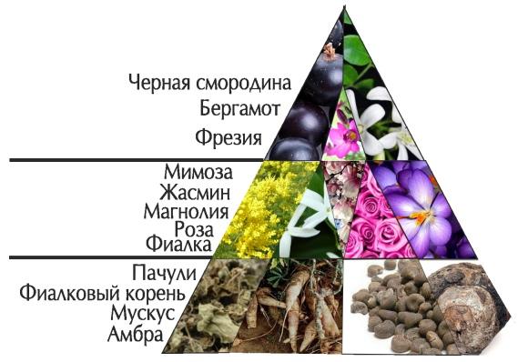 """Пирамида ароматов """"Жизнь прекрасна.Элеганс"""""""