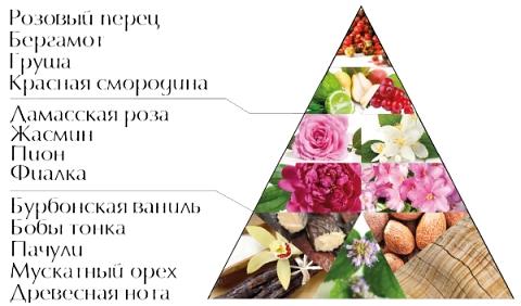 """Пирамида ароматов духов """"Магический цветок"""""""