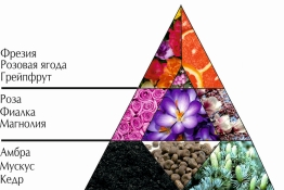 """Пирамида ароматов парфюмерной воды """"Гала"""""""