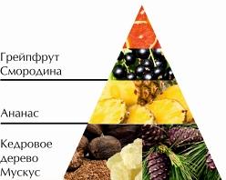 """Пирамида ароматов туалетной воды """"Кузнецкий мост"""""""