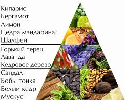 """Пирамида ароматов туалетной воды """"Лучший"""""""