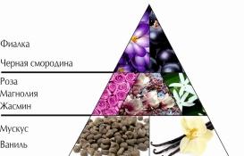 """Пирамида ароматов парфюмерной воды """"Мадоре"""""""