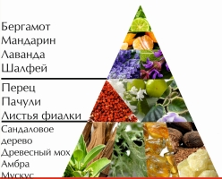 """Пирамида ароматов одеколона """"Арбат"""""""