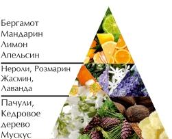 """Одеколон """"Дикая вода 4777"""" пирамида ароматов"""