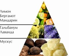 """Пирамида ароматов одеколона """"Ожен"""""""