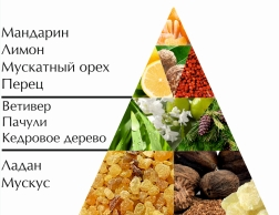 "Одеколон ""Паша"" пирамида ароматов"