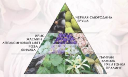 """Пирамида ароматов духи """"Моя роза"""""""