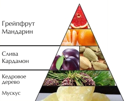 """Пирамида ароматов туалетной воды """"Миллионер"""""""