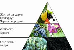 """Пирамида ароматов парфюмерной воды """"Сезон любви"""""""