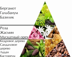 """Пирамида ароматов одеколона """"Шоу лучшего мужчины"""""""