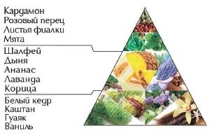 """Пирамида ароматов туалетной воды """"Символ"""""""