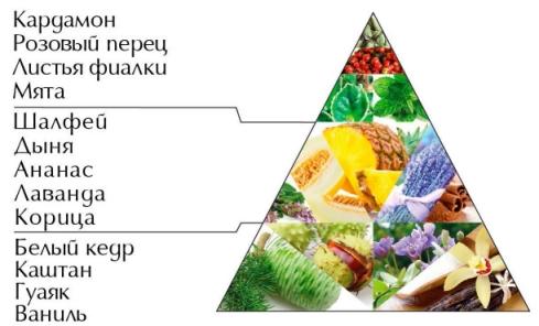 "Пирамида аромата серии ""Символ"""