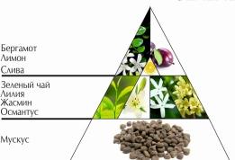 """Парфюмерная вода """"Зеленый чай. Бергамот"""" пирамида ароматов"""